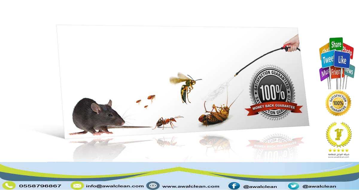 حشرات متنوعة
