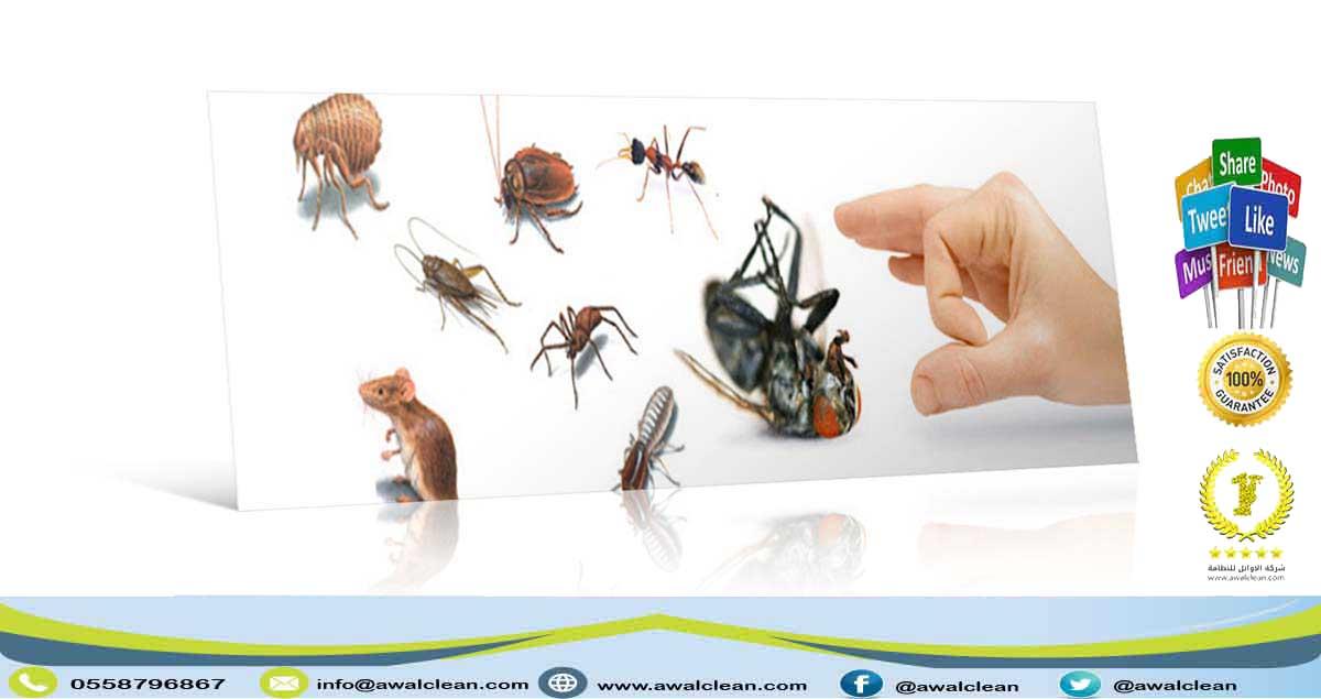 مكافحة حشرات في الامارات