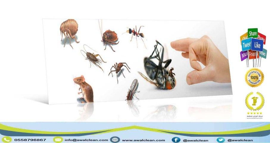 مكافحة حشرات في الرياض