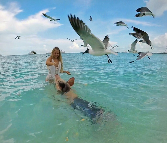 Pigs Beach in the Bahamas