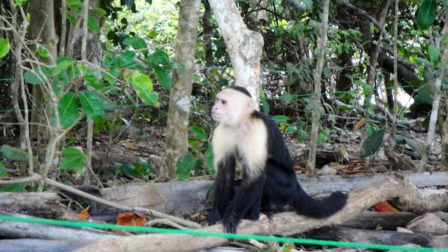Monkeys were everywhere.