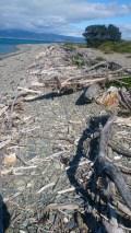 flotsom and jetsam on beach