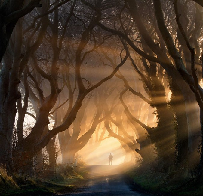 Dark Beech Alley, Northern Ireland
