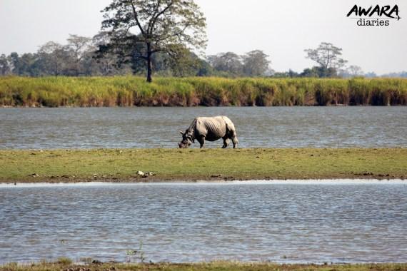Explore Kaziranga National Park - The Complete Guide