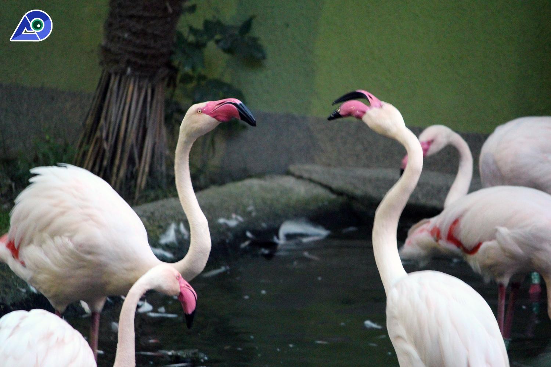 Salzburg Zoo 4