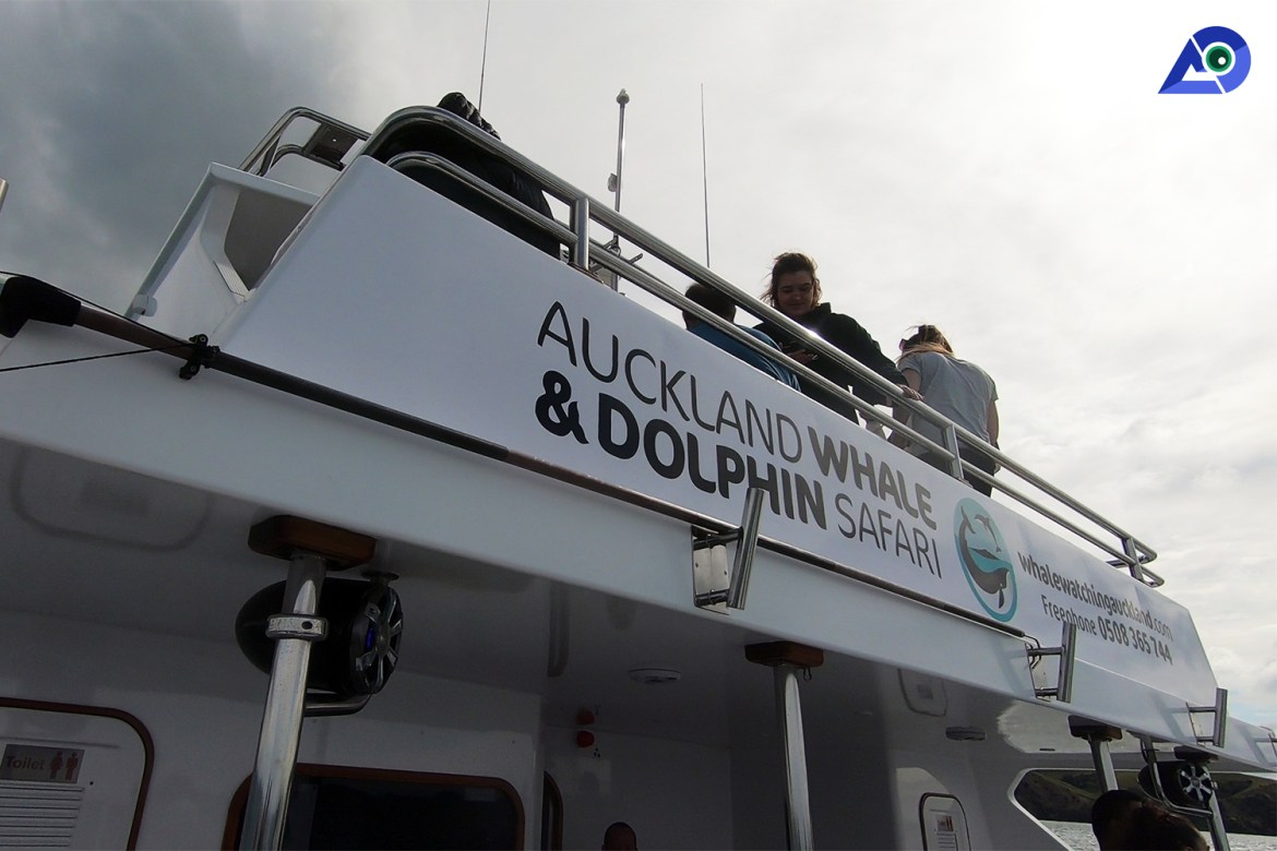 Auckland Whale And Dolphin Safari - The Ultimate Experience