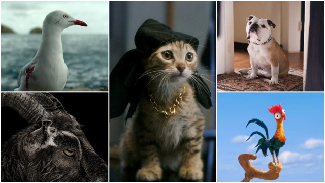 From left; Steven Seagull from The Shallows, Black Phillip from The Witch, Keanu from Keanu, Marvin from Paterson, Heihei from Moana