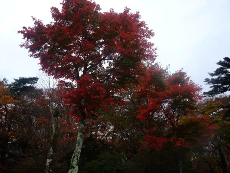 見晴台の紅葉