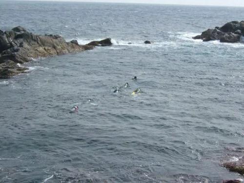 泳いでいる人がいる
