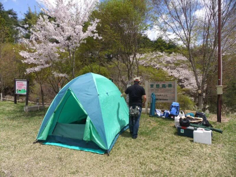 桜の木の下にテントを張ってみた