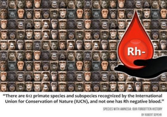 blood, blood type, primate dna
