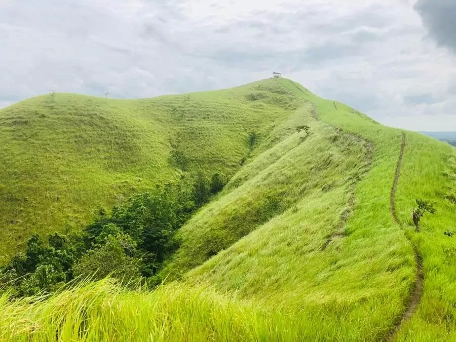 bohol3 - Known as the beauty of the island of Bohol, guess what you can see?
