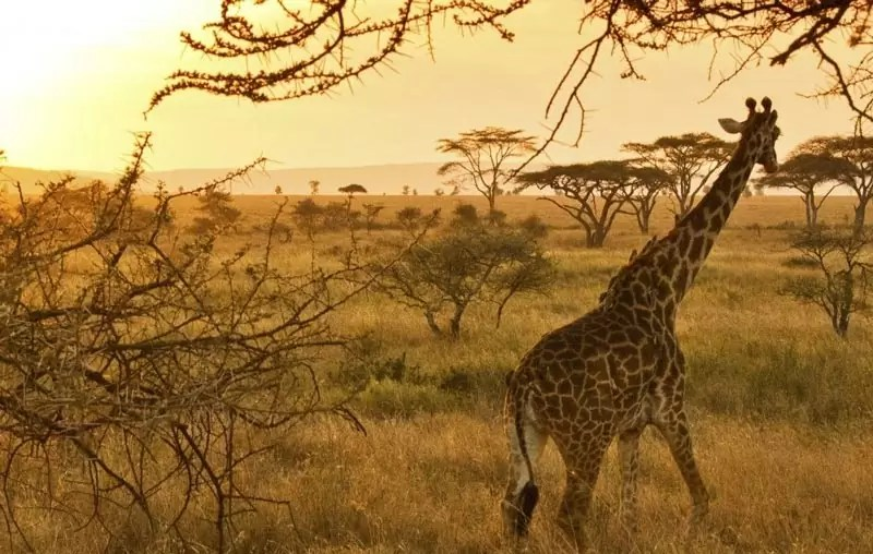 serengeti tanzania - 5 Most Awesome Wildlife Destinations in the World