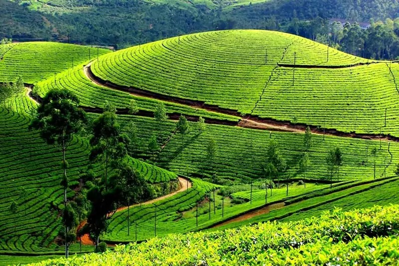 coorg - Best places to visit in India during summer