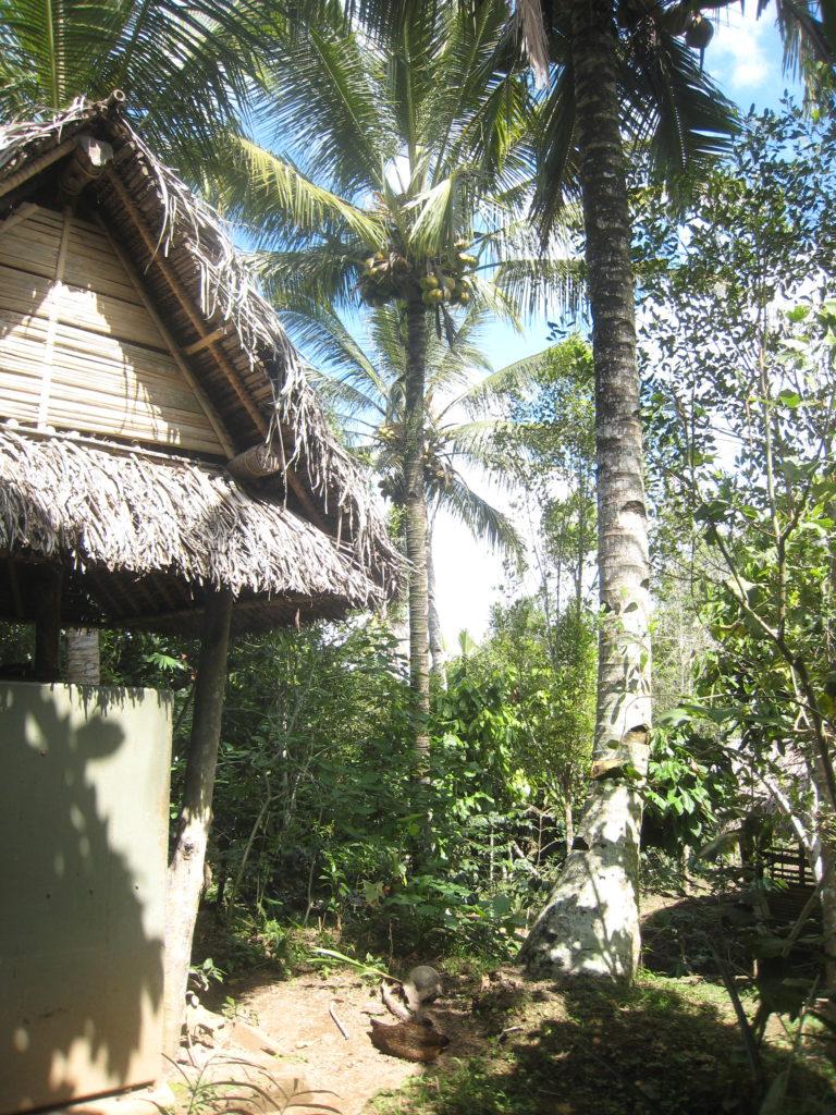 Ubud Luwak Coffee Plantation, Bali