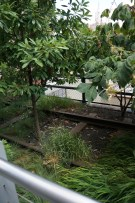 You can still see the rail lines throughout the High Line