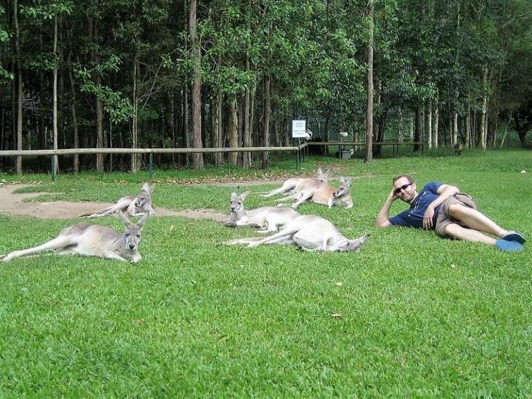 Daytrips Brisbane_Roos Australia Zoo