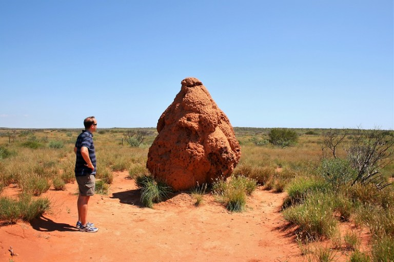 Westaustralien Roadtrip Perth Exmouth Termitenhügel