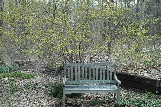 lindera-and-bench2