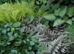 plant mosaic