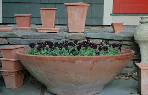 giant bowl of violas