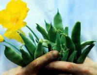 now about those forums…