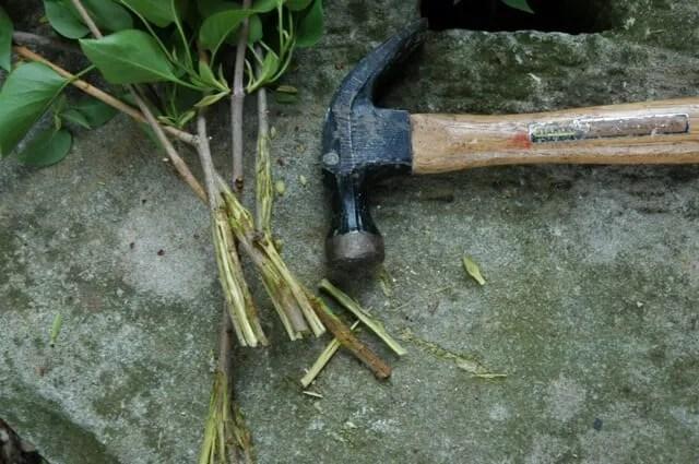 stem crushing w/hammer