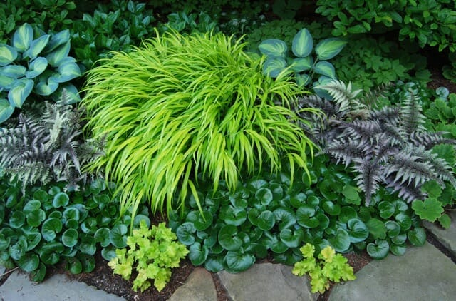 Hakonechloa, painted fern, European ginger, Hosta June