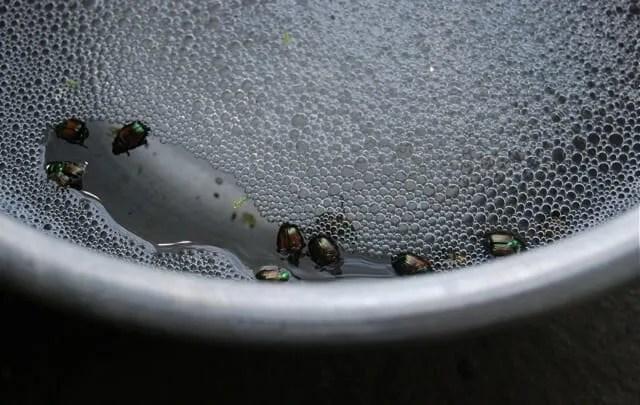 beetle-soup