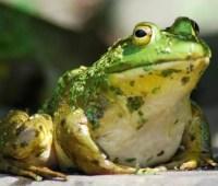 frogboy mama (aka margaret) on radio