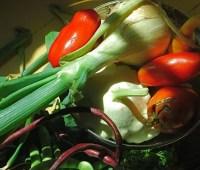 harvest bounty: to stash, or savor?