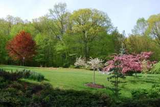 crabapples-and-copper-beech.jpg