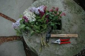 cutting-lilacs-hammer-stems.jpg