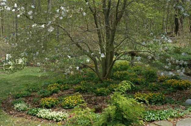 ephemerals-under-magnolia.jpg