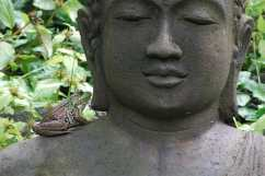 frog-on-buddha-2