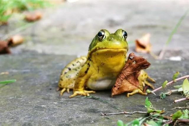 fall frog 2