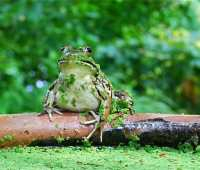gardeners and frogs, on the edge