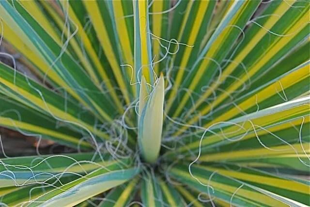 yucca color guard 3