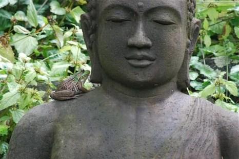budha-and-frog-june-26