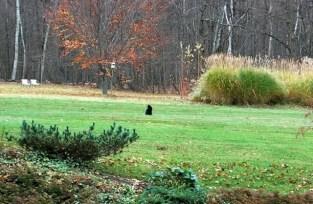 jack-on-the-hunt-november