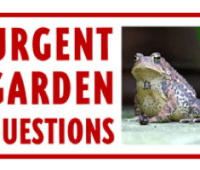 'urgent garden question' forums are open!