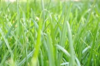 grass-needing-mowing