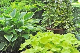 pots-of-houseplants-and-perennials