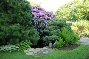 small-pool-and-rhodie