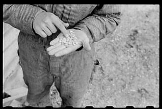 hybrid-corn-seed-iowa-1940