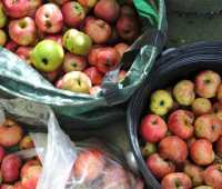 apple season: a windfall of recipes from my friends