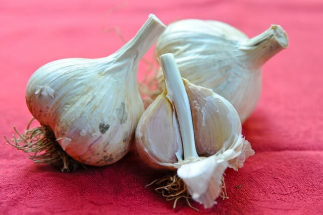 how to grow garlic a q a with filaree farm a way to garden