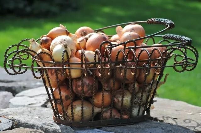 onion basket