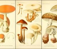 fungi galore: a virtual feast of mushrooms