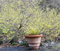 blooming in my garden: april 25, 2011